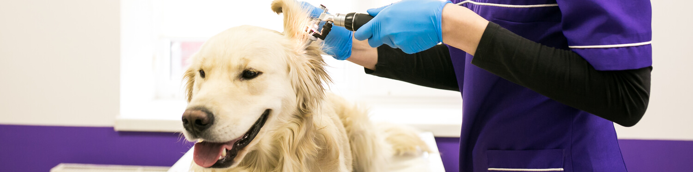 veterinary clinic and dog